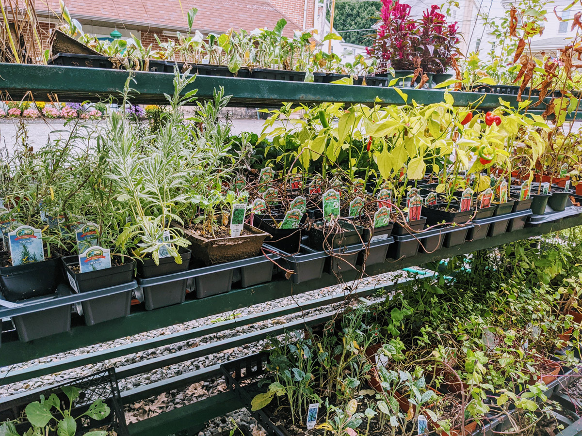Clearance Herbs, Vegetables and Plants on Sale in Bechtelsville PA