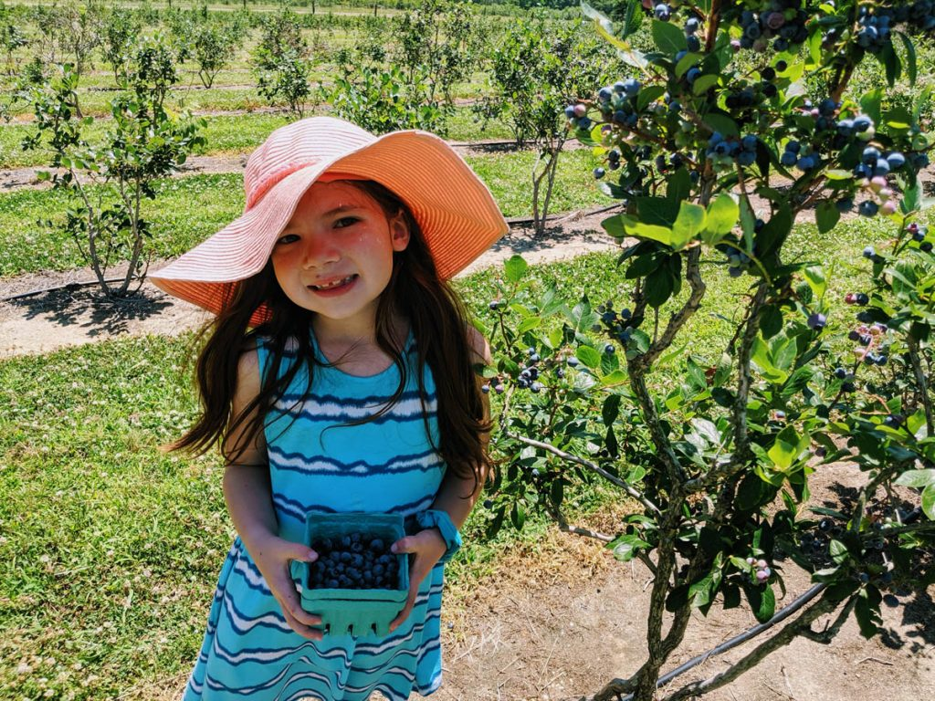 Daughter picking blueberries at a New Jersey Blueberry Farm