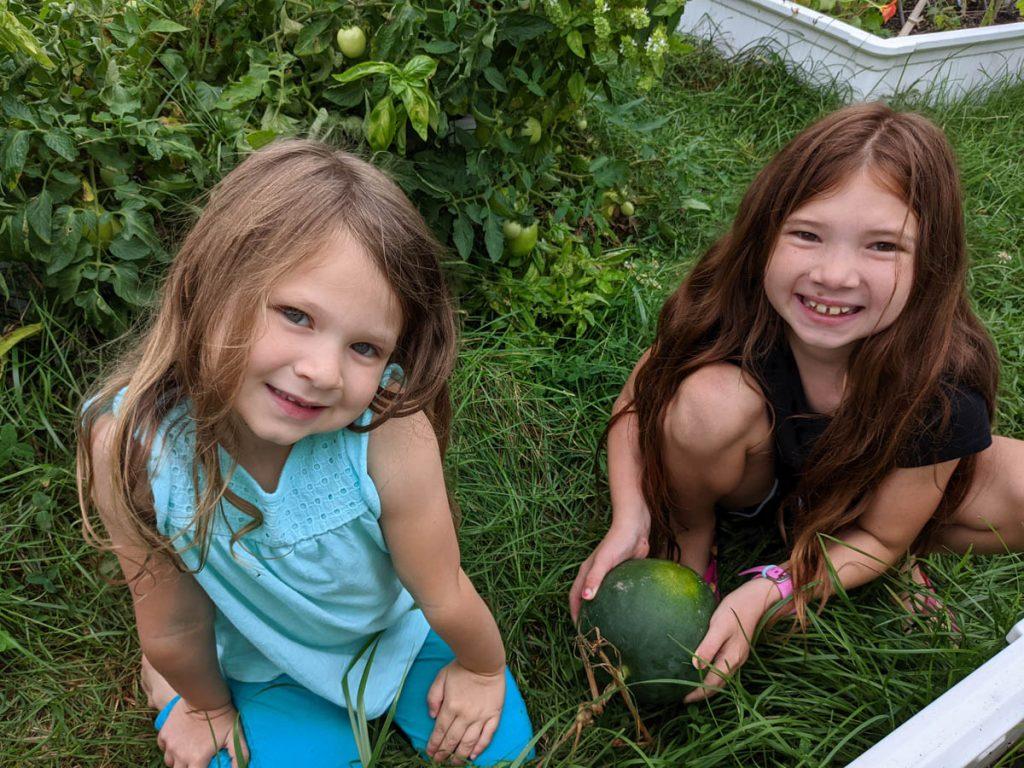 Girls Harvesting Sugar Baby Watermelon in the Garden, 2021