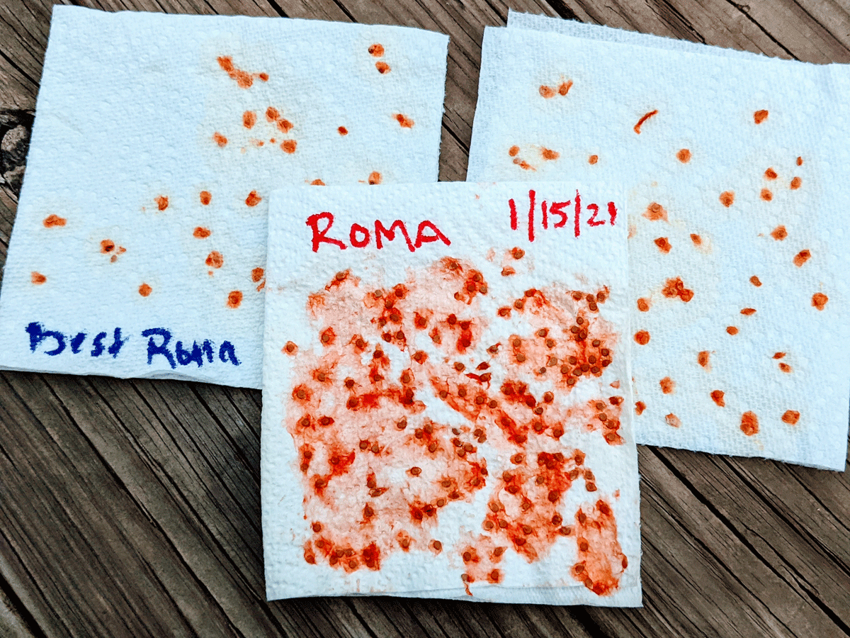 How to Save Tomato Seeds - Paper Towels with Seeds and Labels