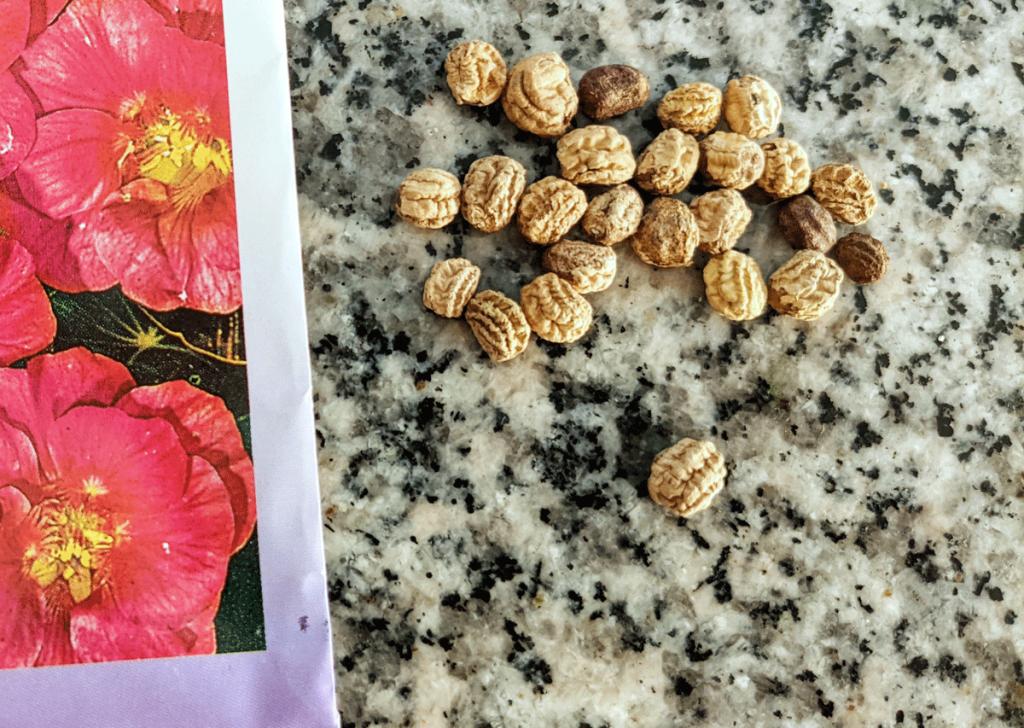 Cherry Rose Nasturtium Seeds next to the seed packet