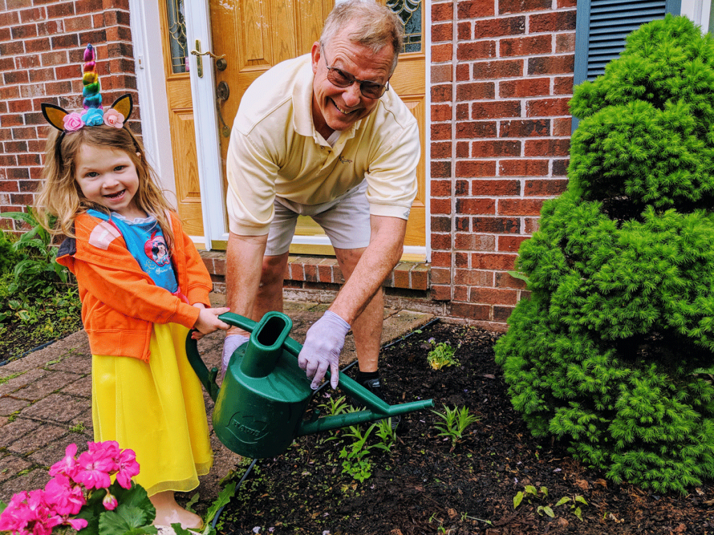 Grandfather and Granddaughter watering evergreen shrubs - fall planting