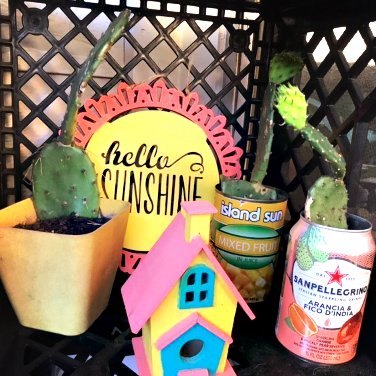 Hello Sunshine Indoor Plant Area Setup by @IAgreeSnowClouds on Instagram, featuring cactus and more
