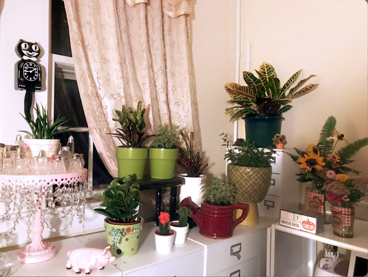 Indoor Plant Display in Home Office Craft Room by @Noodles_Farm on Instagram