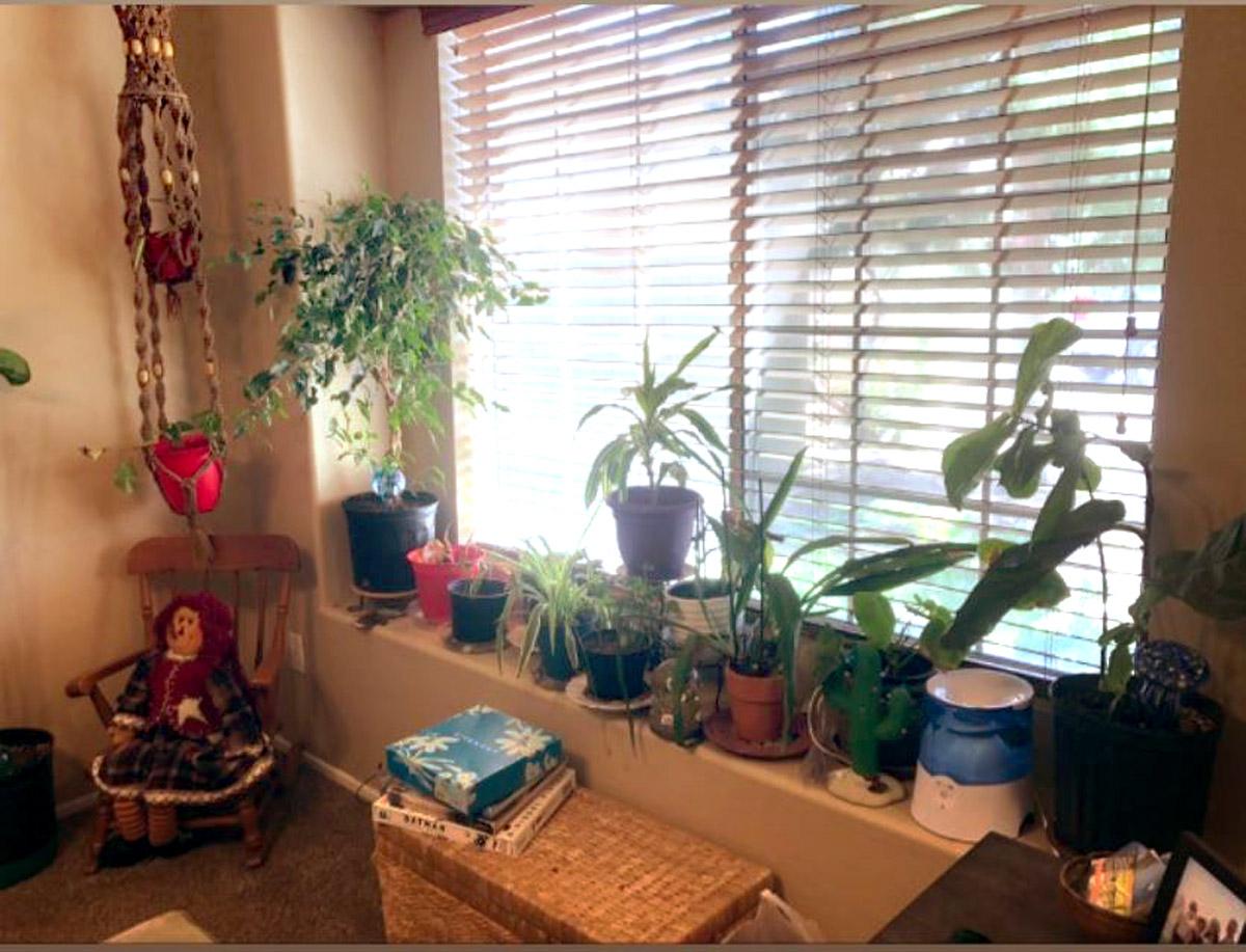 Indoor Plants on Large Window Ledge, by @betterinsuburbia on Instagram