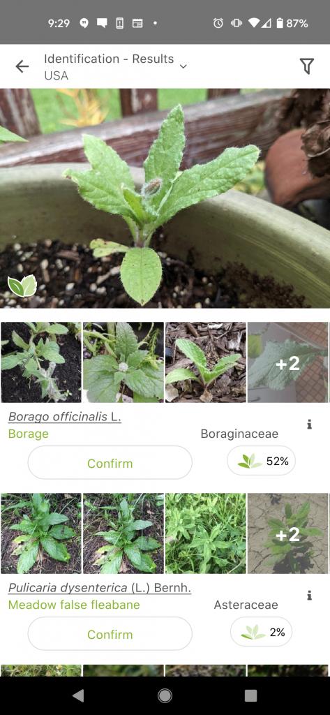 Borage on PlantNet App Used to ID Plants