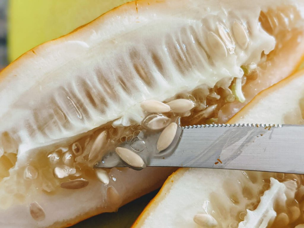 Knife cutting overripe cucumber to remove seeds. Discover How to Save Cucumber Seeds Quickly and Easily.