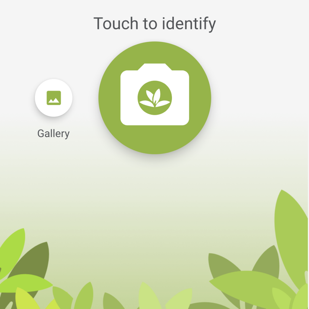 How to Use PlantNet App to Identify Plants