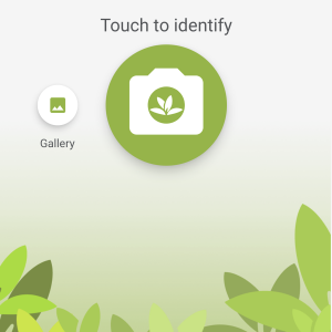 How to Use PlantNet App to Identify Plants (Review & Tips)