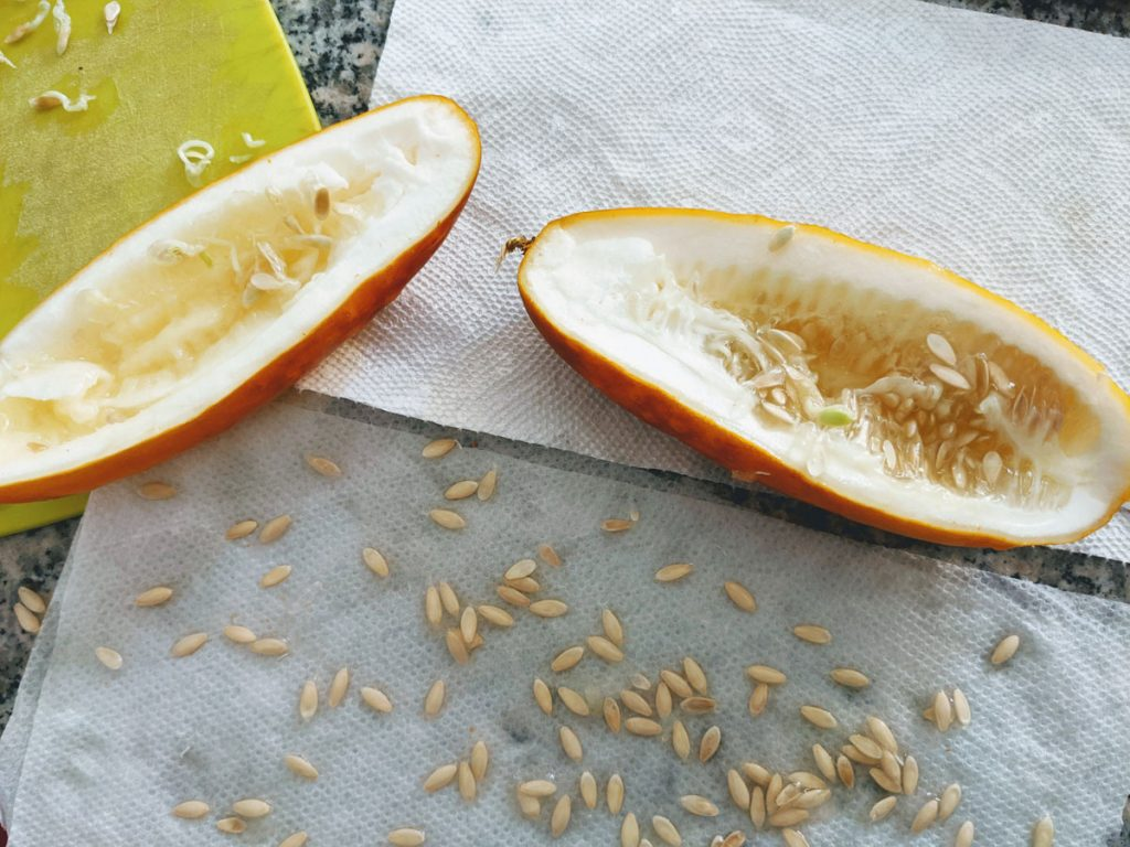 Save cucumber seeds by scooping them out of an overripe cucumber and letting them dry.