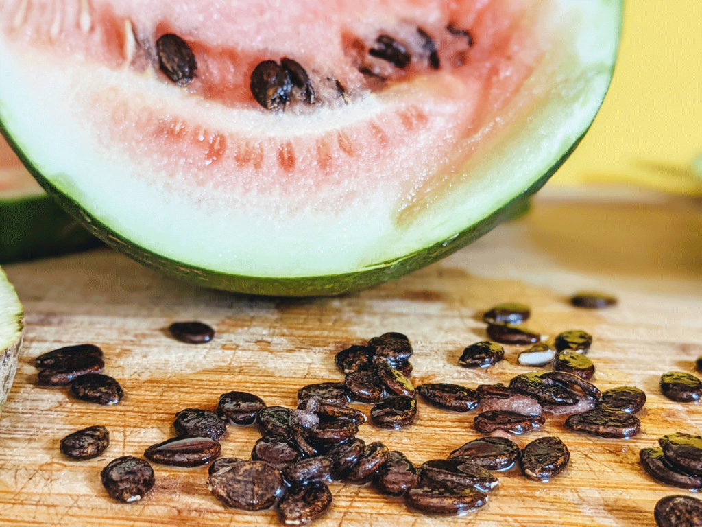 Saving Seeds from Black Diamond Watermelon grown in our garden, 2021