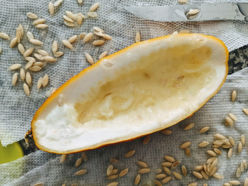 What do cucumber seeds look like? Pointed, flat oval seeds in a cream or tan color; removed from cucumber.